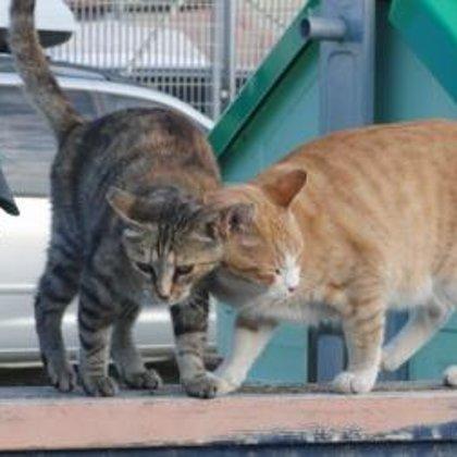 Penelope ed Ettore