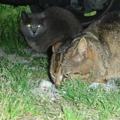 Mustafà e Giada